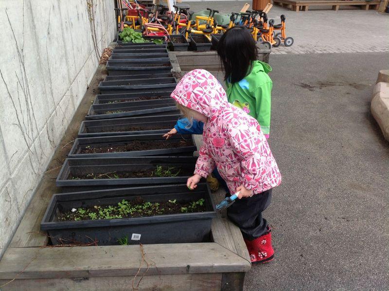 Planting seeds prek